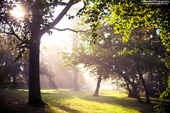 Morning Surprises (Olivia L'Estrange-Bell) Tags: autumn autumnleaves autumnsun canoneos5dmarkii oliviabell oliviabellphotography tbsart