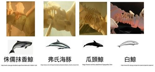 鯨豚頸椎.jpg