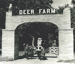 The Deer Farm at Santa Claus Land