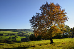 autumnal serenity (pierre hanquin) Tags: blue autumn trees sun color colour tree fall automne landscape geotagged nikon europa europe colours belgium belgique couleurs belgi bleu ciel arbres paysage landschaft arbre couleur lige wallonie 1685 d7000