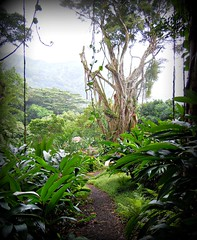 ~~LYON ARBORETUM #21~~ (TravelsThruTheUniverse) Tags: tropicalplants exoticgardens tropicalgardens tropicalfoliage subtropicalgardens tropicallandscapes subtropicallandscapes