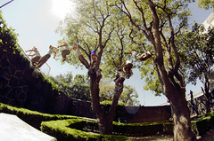Daer Sánchez [ Precision-Precision] (Josefo Robledo) Tags: pictures trees sports monster canon wonderful mexico photography jump cu flickr arboles action extreme worldwide 7d freerunning runners redbull brincos daer parkour deportes facebook urbanfreeflow secuencial