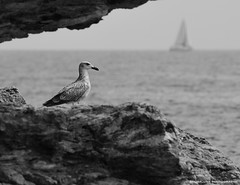 seagull looking at view (scubaluna) Tags: travel italien architecture landscape outdoors tuscany gebäude toskana lanschaften portoazzurro blackwhitephotos isleofelba inselelba olympuse5 scubalunaphotography ringexcellence