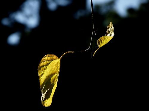 momentos de outono - Automn moments by @uroraboreal