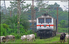 Sindri Passenger (Raj Kumar (The Rail Enthusiast)) Tags: canon cow indian tracks passenger railways raj abb sindri kumar dhanbad 30206 wap7 sx30is