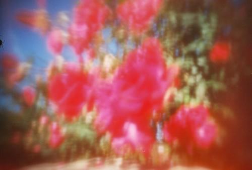 ut gardens (2)