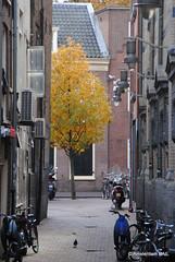 Autumn in Amsterdam (Amsterdam RAIL) Tags: autumn tree fall amsterdam automne herbst herfst bikes boom bicycles arbre baum fietsen ojp stadsarchief