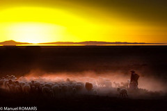 Uyuni, Bolivia (Manuel ROMARS) Tags: sunset yellow sheep shepherd bolivia dust orurouyuni manuelromaris