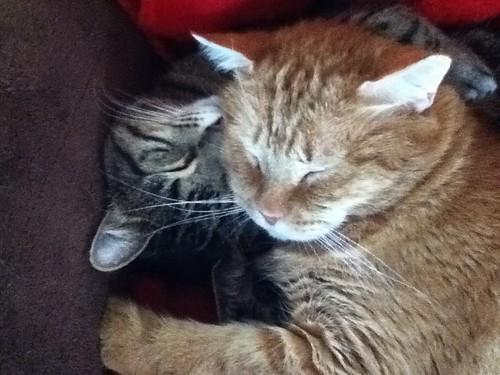 Snuggle Buds