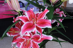 Pink Lilies (GE Cox) Tags: flowers garden lily lilies stamen stigma filament pinklily tepal gynoecium