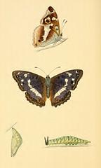 2butterfliespaintlady