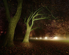 november night in paradise II (Paul Petruck) Tags: november trees mist lightpainting night nebel jena 1000views paradies seenintheinterestingnessarchives