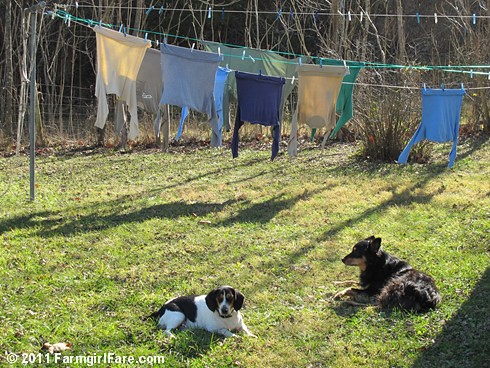 Bert and Bear on laundry duty 1 - FarmgirlFare.com