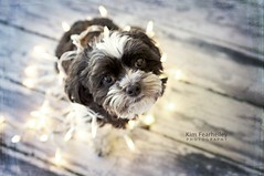 Ollie in lights . . . (KimFearheiley) Tags: ollie gettyimages boxy kimfearheileyphotography
