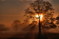 Heavanly (fidget65) Tags: morning light color tree silhouette fog dawn shropshire cattle rays hue shafts heavanly attinghampark