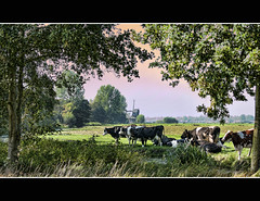 Pastorale (Wim K) Tags: trees holland green mill netherlands windmill dutch rural photography countryside cow photo nikon mood cattle country stock kade nederland meadow atmosphere pasture resting idyllic grazing arcadia stockphoto pastorale stockphotography pittoresk d90 goudriaan wpk goudriaanse wpk2